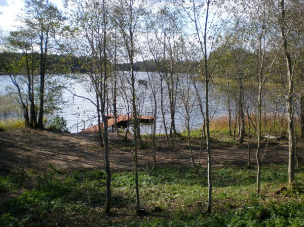 Лес и озеро весной