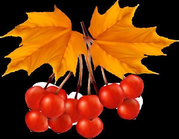 Калина и кленовый лист