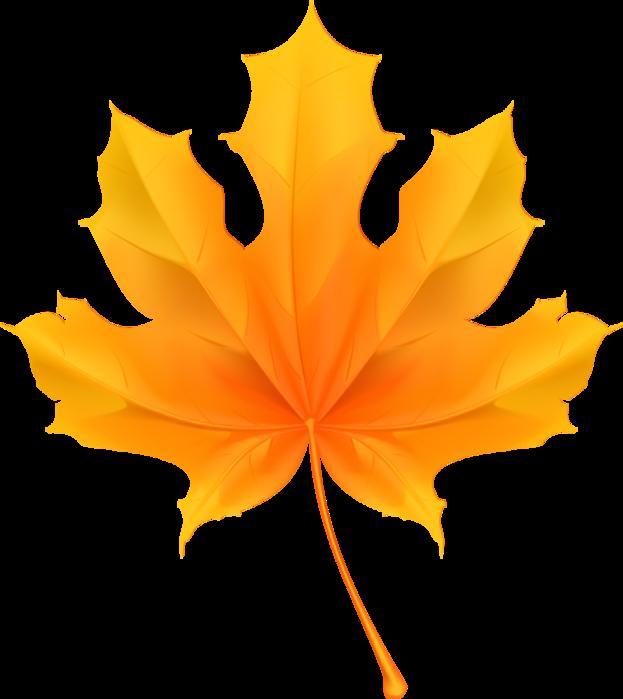 Осенние листья. Клипарт png с прозрачностью
